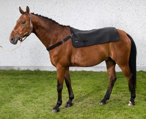 2100_Horseback-Warmer