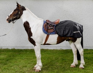 2126_Loin-Rug-Horse