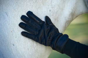 1370_Gloves-2_NL-Low