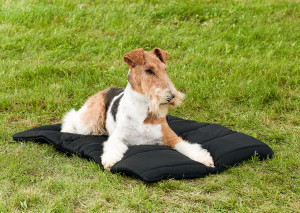 3011_Dog-Blanket-Foxterrier