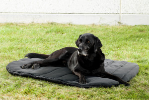3031_Dob-Bed-oval-labrador